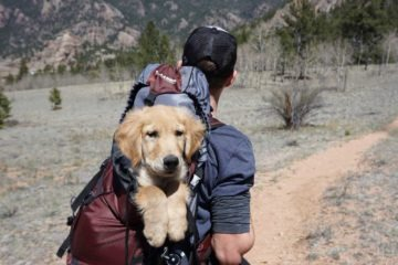 Dog in a dog bag on a climbers back while they're on their way to the mountains